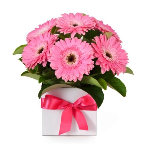 Букет из гербер розового цвета в белой коробочке перетянутой ленточкой