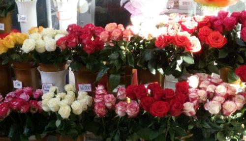 Цветы в Бресте по оптовым ценам
