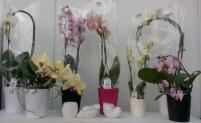 Выбор орхидей